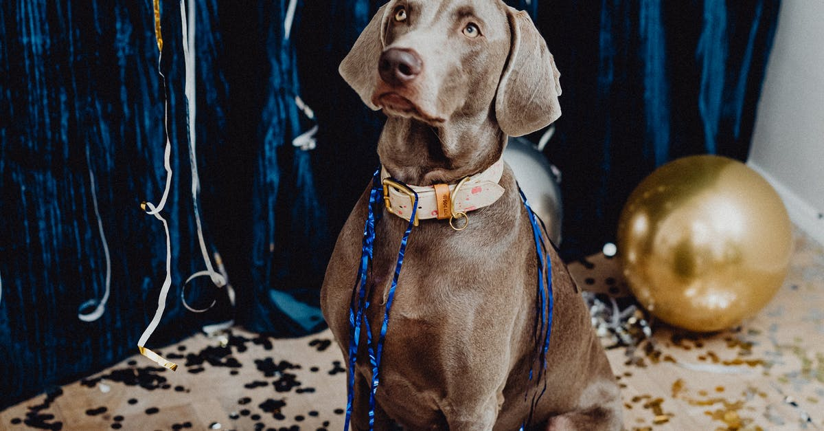 A dog wearing a neck tie